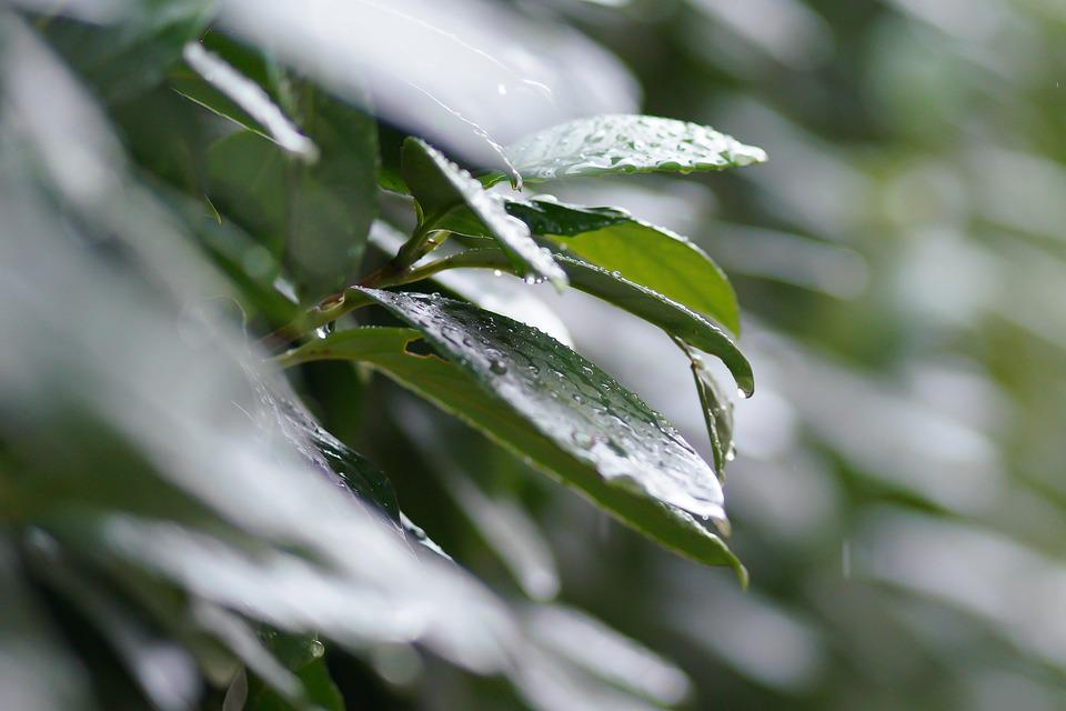 Leaf, Nature, Rain, Drop, Wet, Purity, Summer