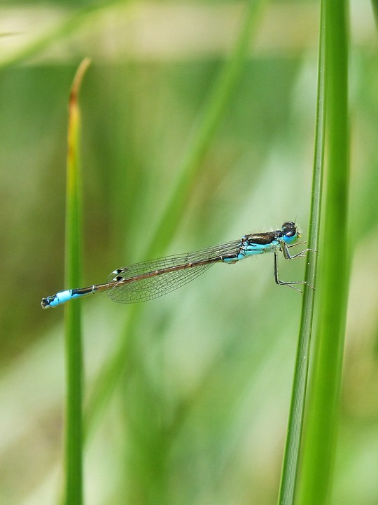 Dragonfly, Blue Dragonfly, Wetland, Leaf, Flying Insect