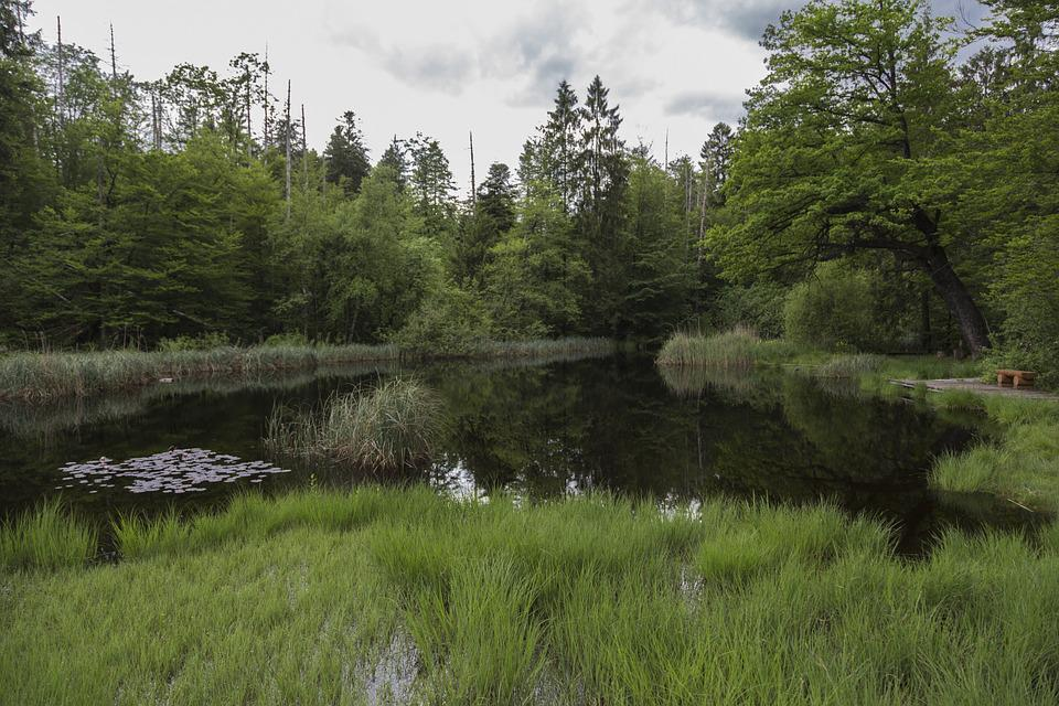 Moor, Moorland, Swamp, Nature Conservation, Wetland