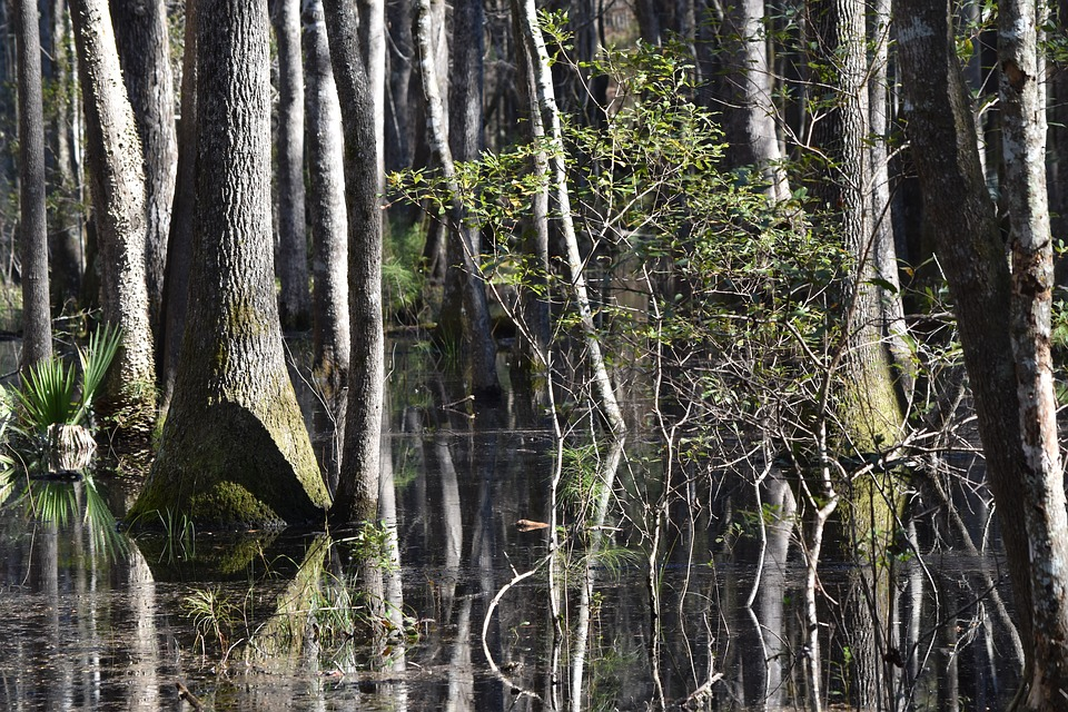 Wetland, Tree, Southern, Forest, Remote, Back Country