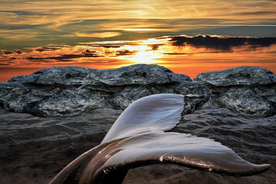 Whale, Tail, Sea, Sunset, Animal, Mammal, Wildlife