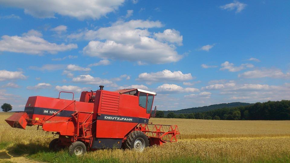 Wheat, Wheat Field, Wheat Spike, Spike, Cereals, Grain