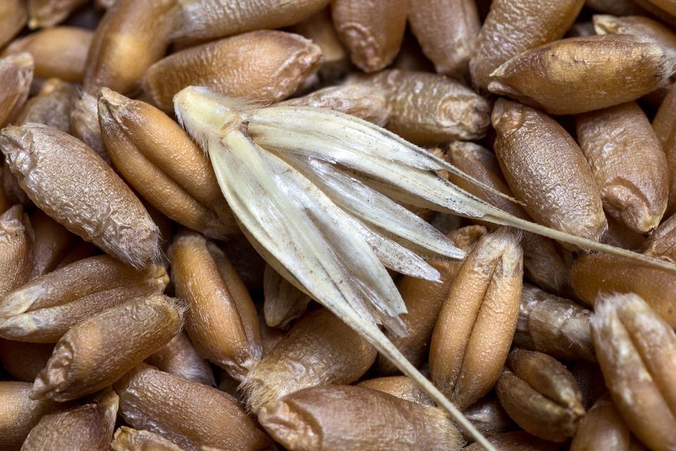 Cereals, Wheat, Grain, Close, Wheat Spike