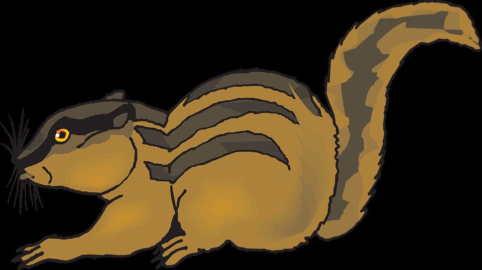 Chipmunk, Startled, Forest, Animal, Whiskers