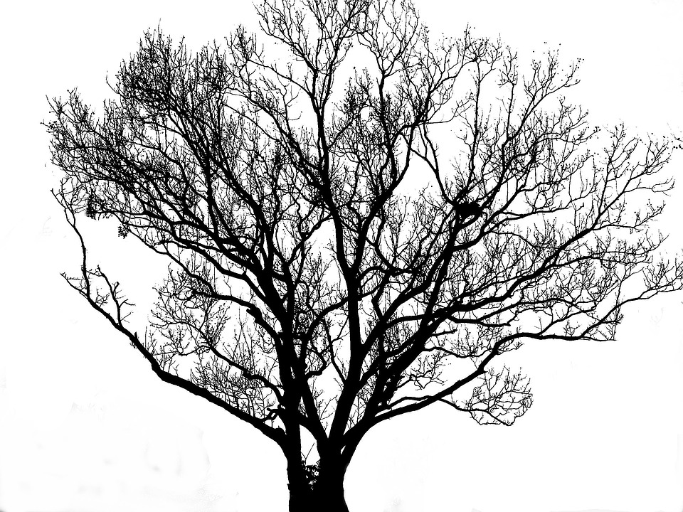 Tree, Silhouette, Black, White, Backlight, Deadwood