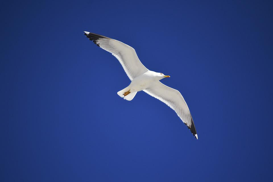I can't work tommorow because I found this bird in the sky, if you can't work tommorow I urge you to post the reason why.