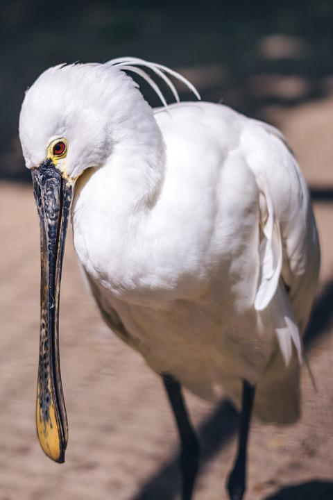 White Bird, Zoo, Cage, Dzungla, Bird, Eye, Figure