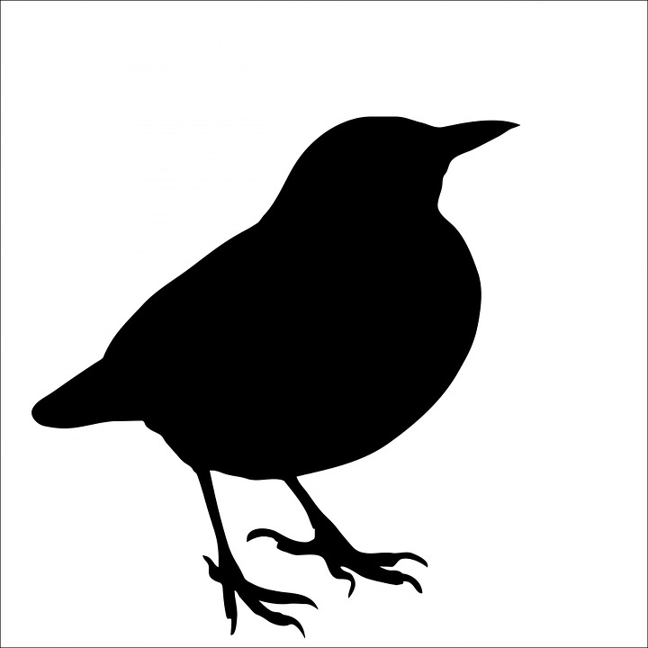 Bird, Blackbird, Animal, Black, Silhouette, Art, White