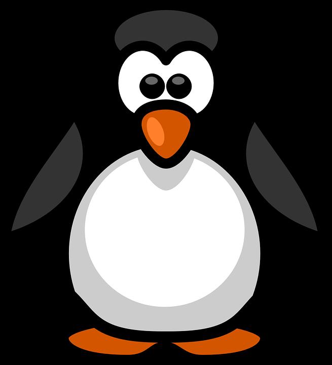 Penguin, Aquatic, Flightless, Birds, Black, White
