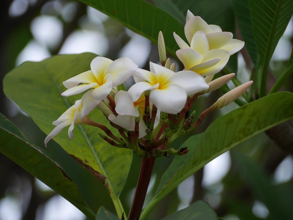 Flowers, White, Yellow, Plant, Garden, Blossom, Flora