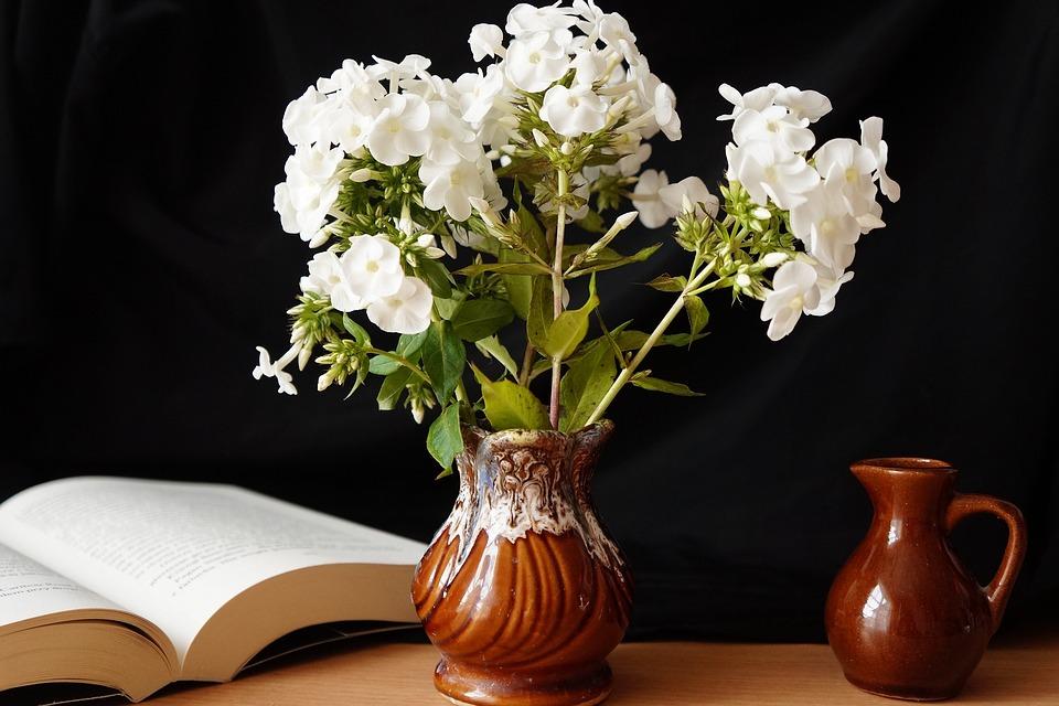 Nature, Plants, Flowers, White, Phlox, Vase, Jug, Book