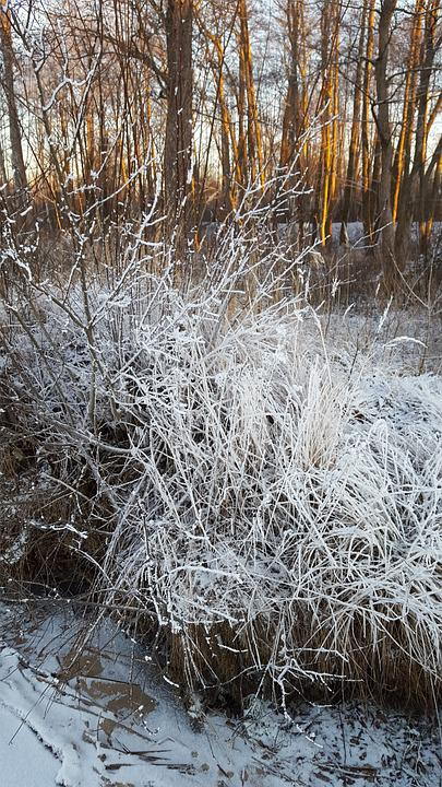 Branch, Winter, Trees, Cold, Frost, Nature, White