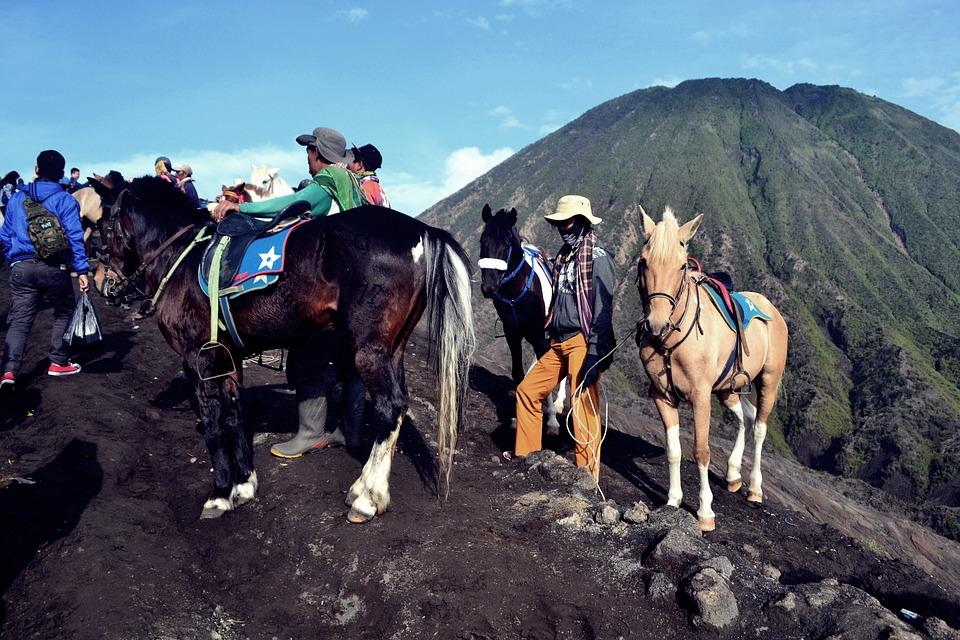 Horse, Animal, Landscape, Ride, Nature, Brown, White