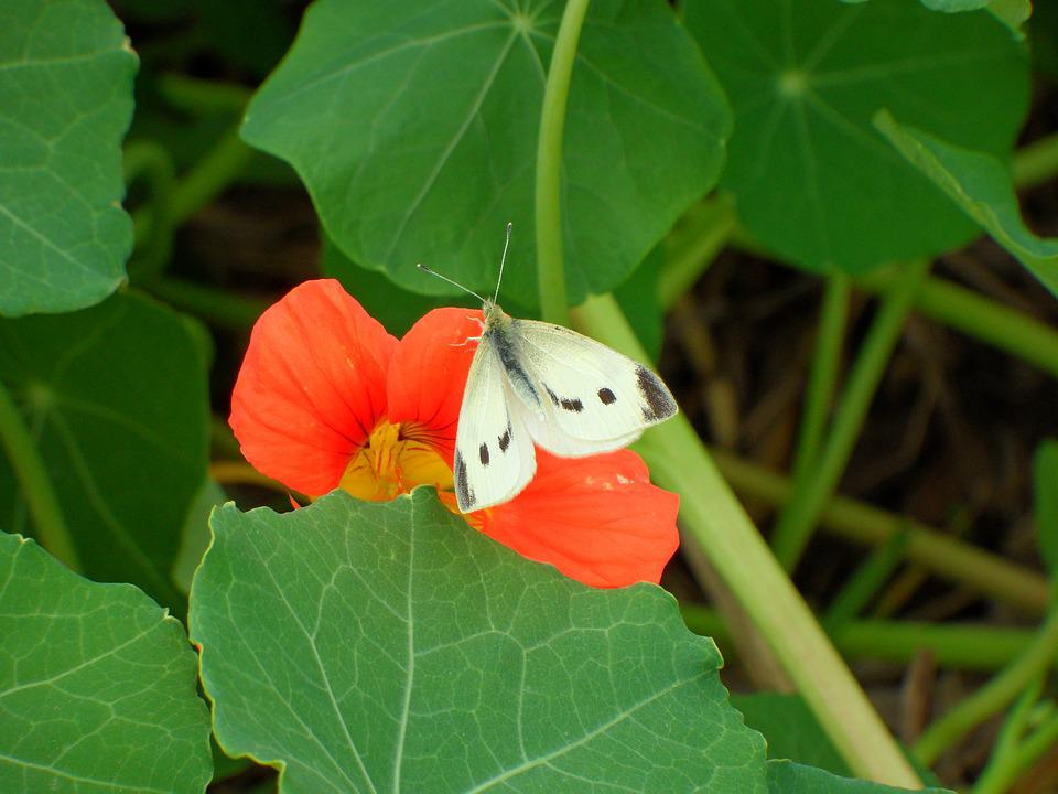White Butterfly, Red Flower, Green Leaves