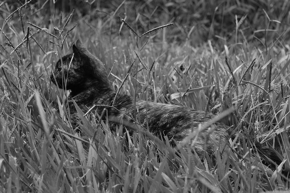 Cat, Black, White, Grass, Outdoors, Hunting