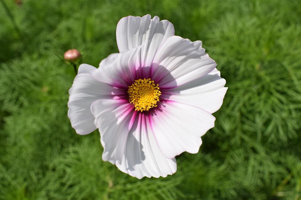 Blossom, Bloom, Flower, White, White Blossom, Close