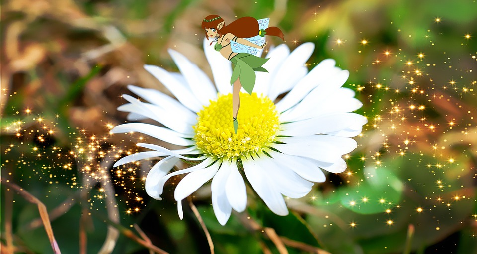 Flower, Fee, Fairy Tale, Daisy, Close Up, White