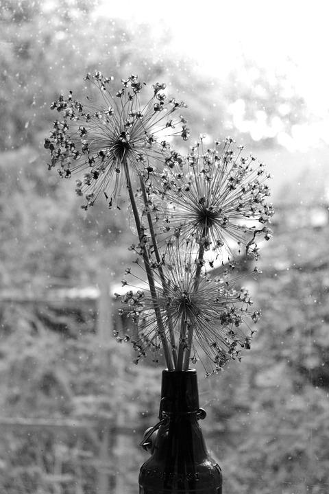 Dry Bouquet, Black, White, Ornamental Garlic, Nostalgic