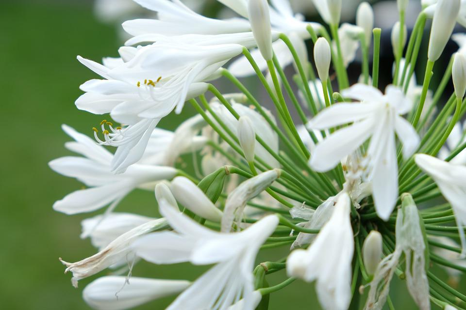 Flower, White, White Flower, Plant, Blossom, Bloom