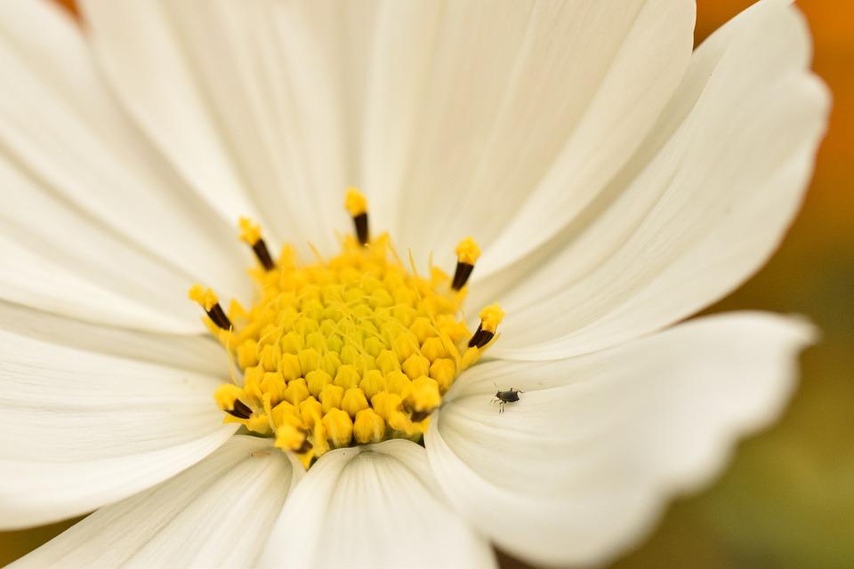 White Flower, Flower, Garden, Insect, Nature, Flora