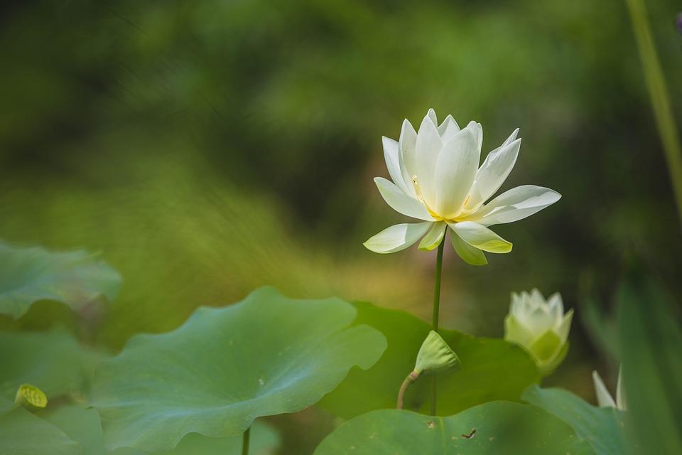 Flower, Green, Nature, White