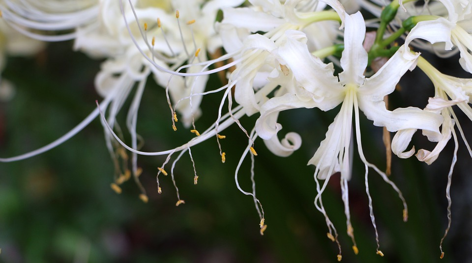 White Flower, Bunch Of Flowers, Nature, Petals