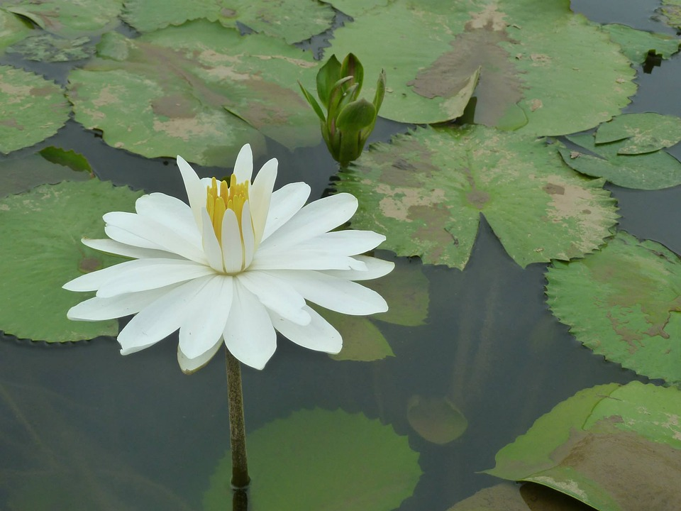 Flower, White, Pure Vegetable Cleansing