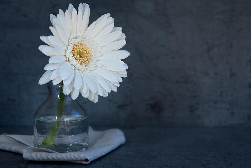 Flower, White Flower, Blossom, Bloom, Petals, White
