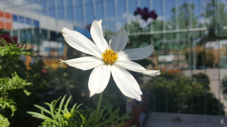 Free photo white flower white garden shade flower bars sky max pixel white flower flower white shade garden sky bars mightylinksfo