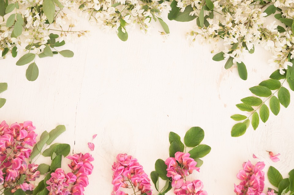 Acacia Flowers, White Flowers, Pink Flowers, Spring
