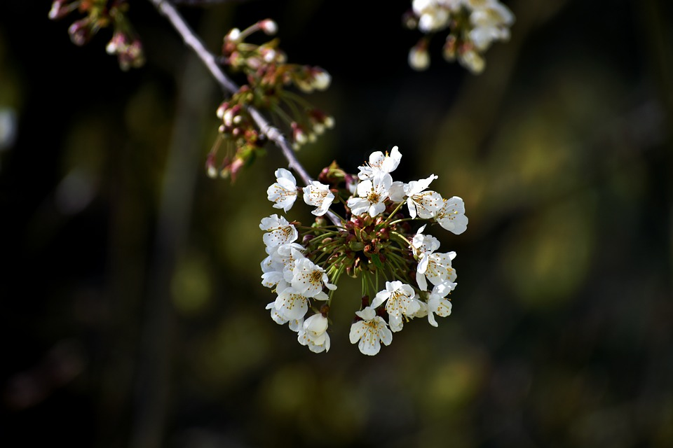 Flowers, Blossom, Spring, Bloom, White, Bunch, Floral