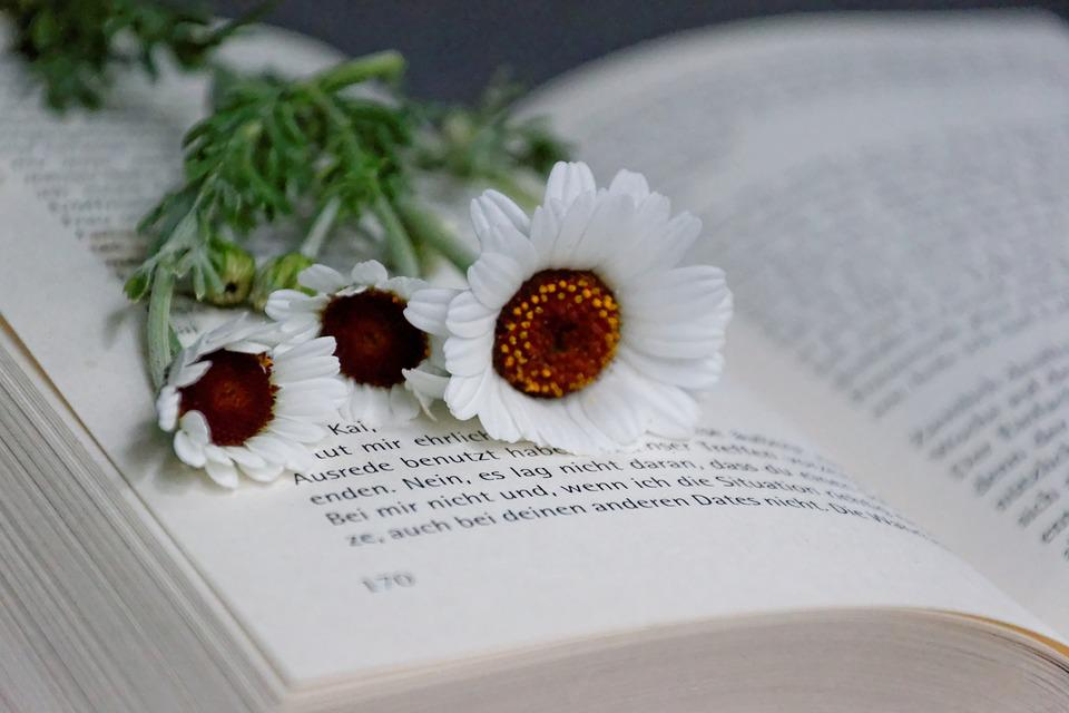 Book, Flowers, Read, White, Dreams, Education