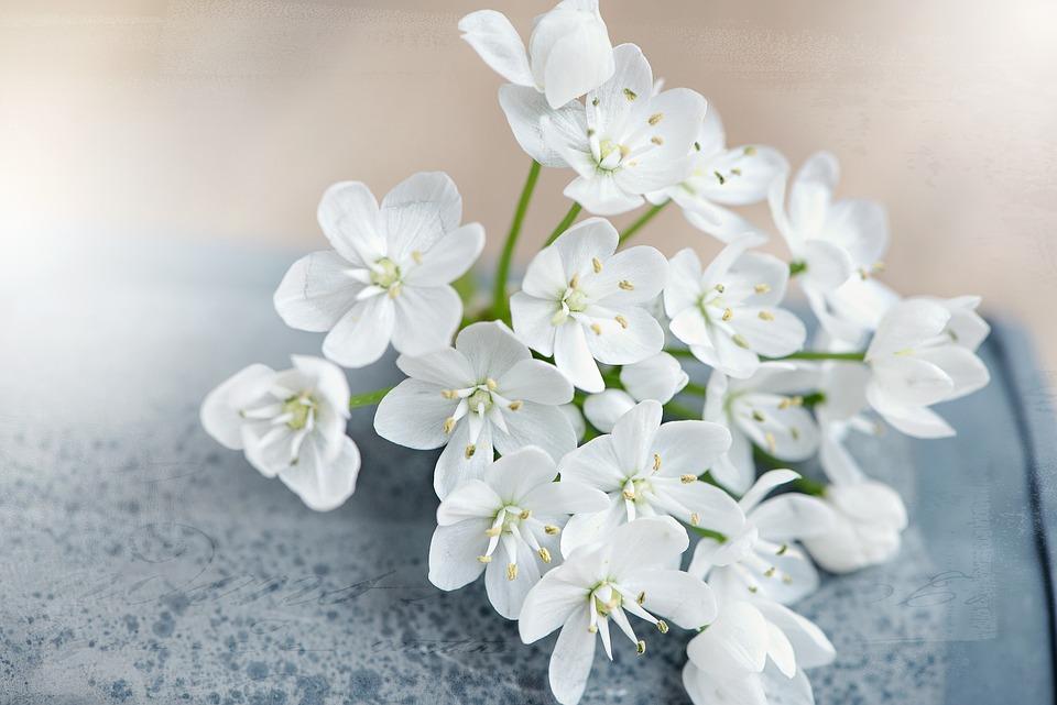 Flower, Flowers, White, White Flowers, Tender