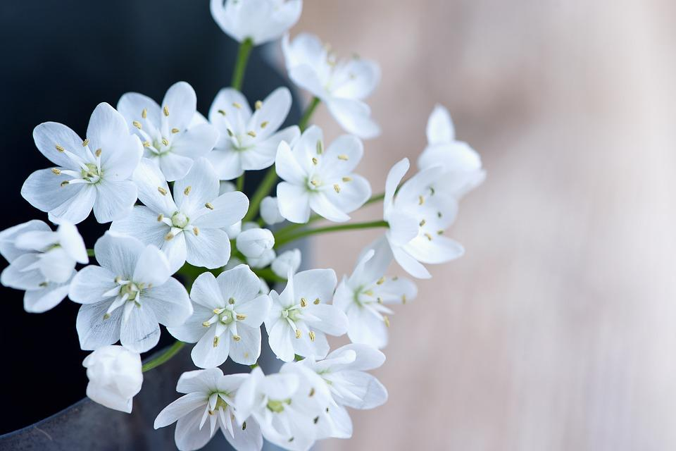 Flower, Flowers, White, White Flowers, Leek Flower