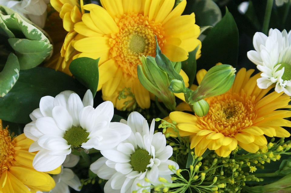 Flowers, Yellow Flowers, White Flowers, Marguerite