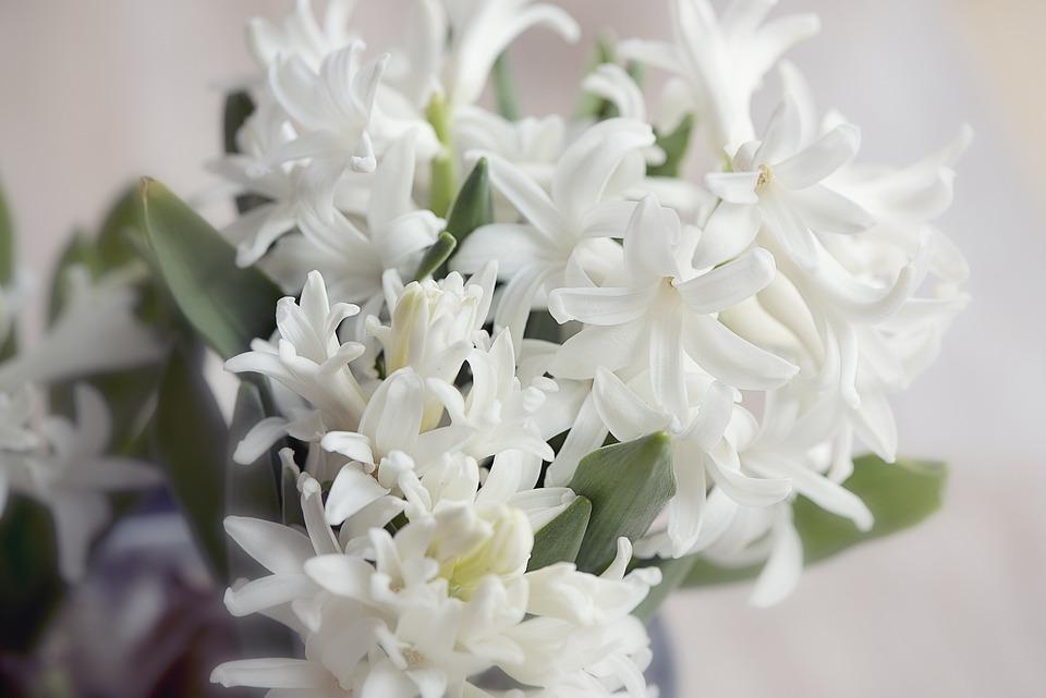 Hyacinth, Flower, Flowers, White, Plant, Spring