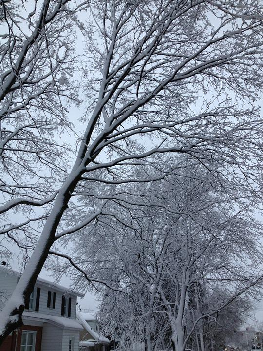 Winter, Frost, Ice, Cold, Branches, Tree, Snow, White
