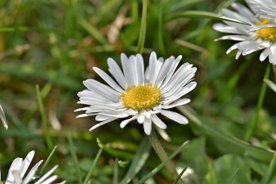 Geiss Floral, Blossom, Bloom, Flower, Bloom, White