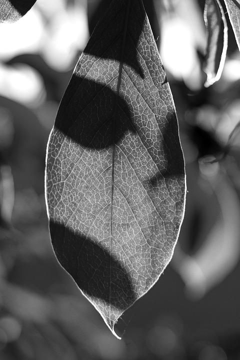 Leaf, White, Nero, Nature, Leaves, Plant, Green