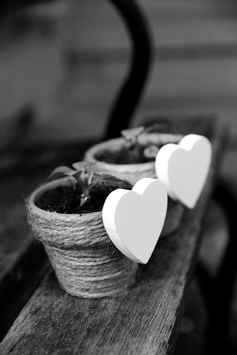 Heart, White Heart, Flowerpot, Plant, Love, Romance