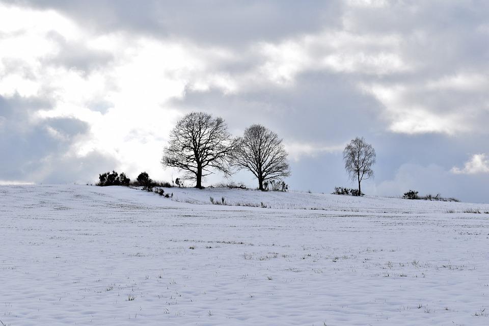 Snow Landscape, Trees, Horizon, Snow, Winter, White