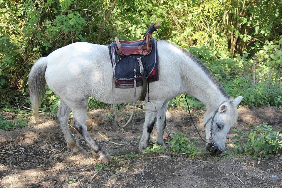 White Horse, Animal, White, Object, Horse Back Seat