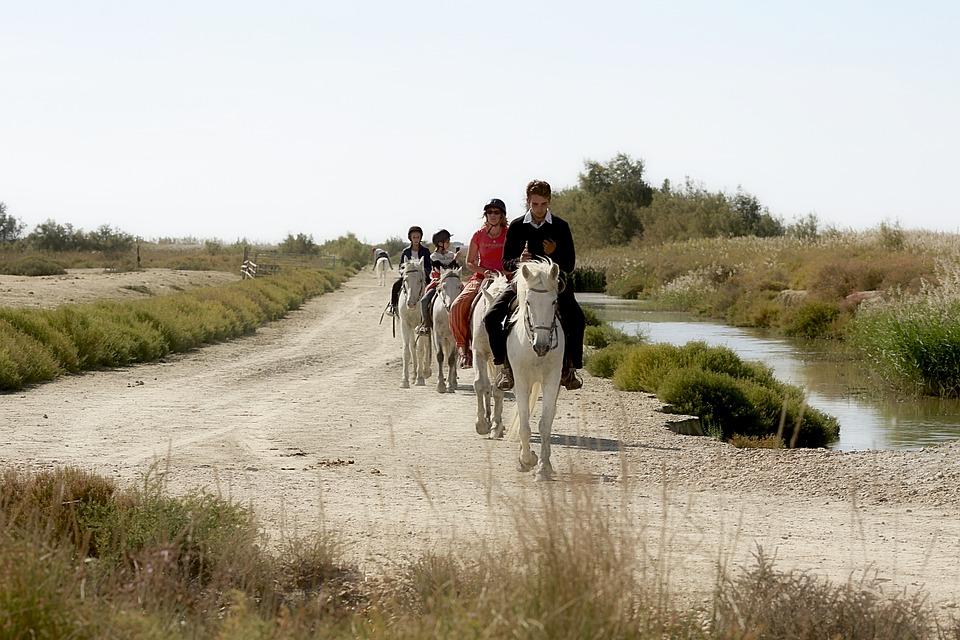 Horse, Shoe, Mane, Herd, White Horse