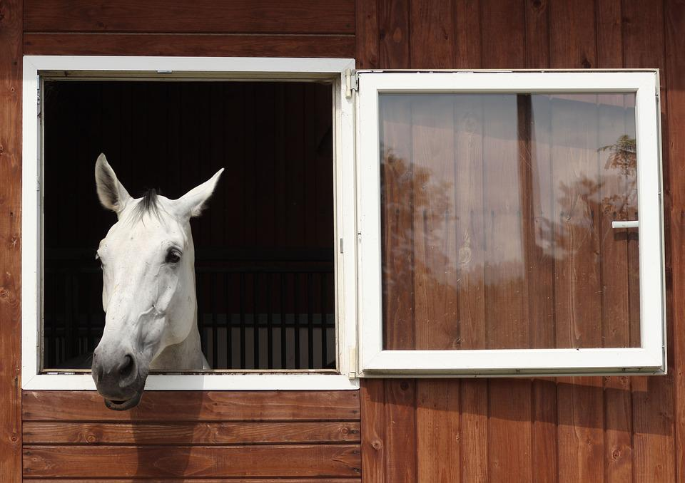 The Horse, Rest, White Horse