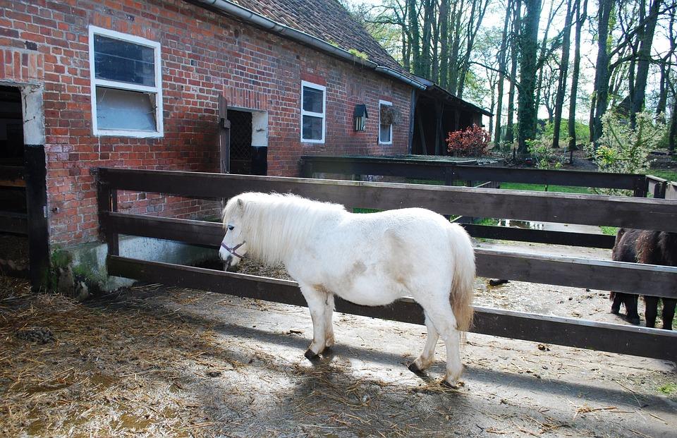 Small, White Horse, Barn, White, Horse, Pony, Horses
