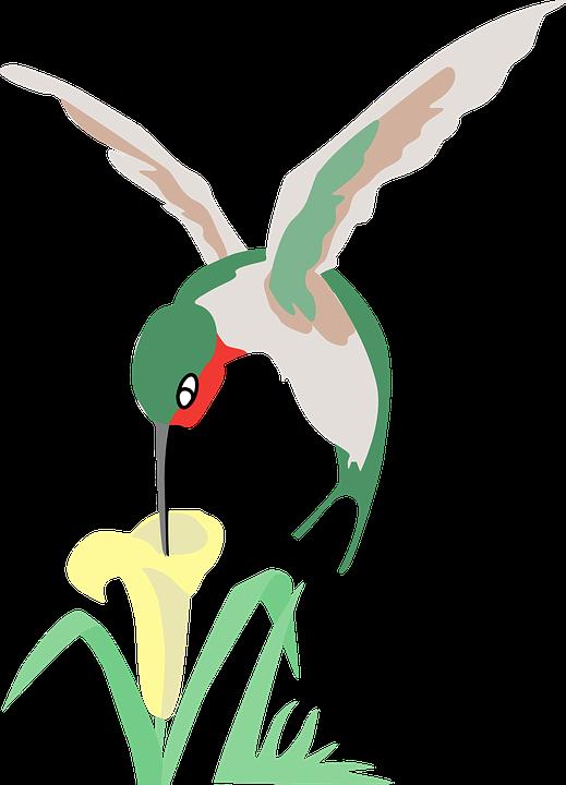 Hummingbird, Green, Flower, White, Bird, Grass, Plant