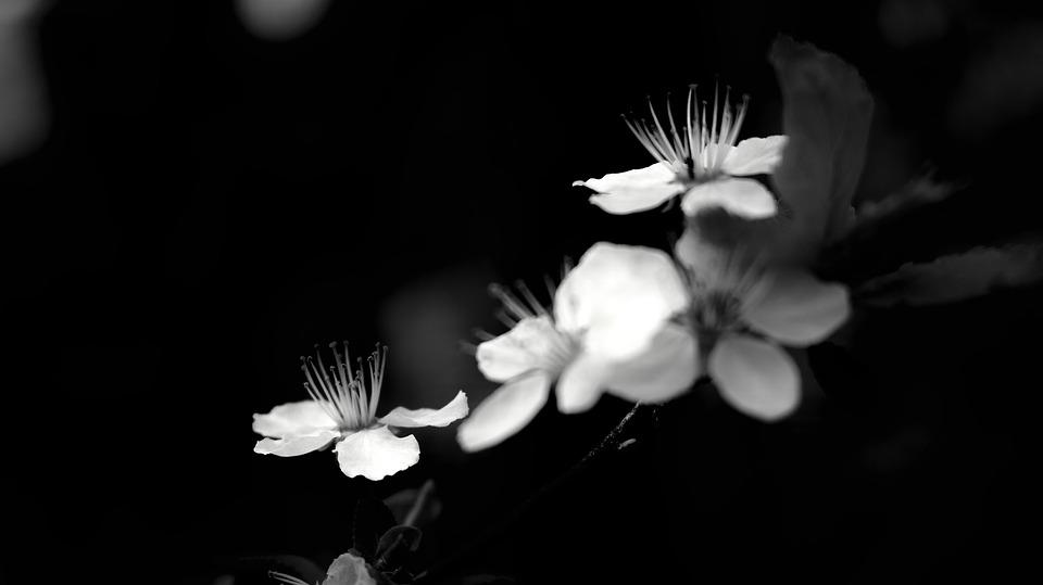 B W, N B, Monochrome, Nature, Light, White, Black