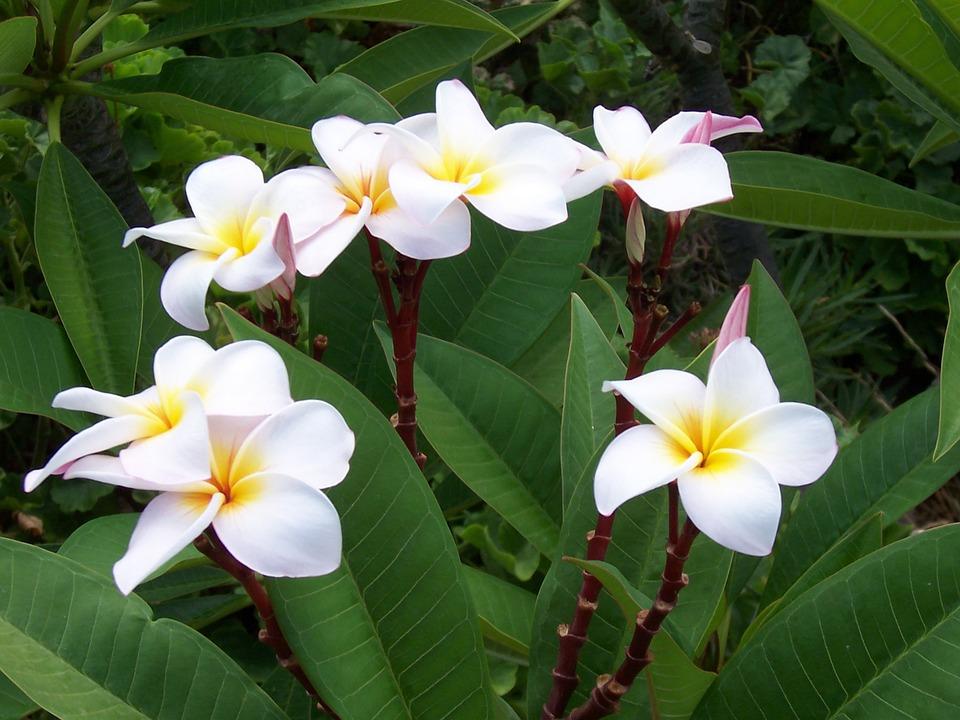 Flower, Plant, Nature, Bloom, White, Blossom, Flora
