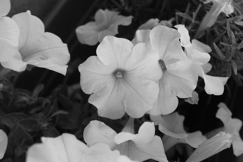 Free photo white nature spring black flowers black and white max pixel flowers nature black white black and white spring mightylinksfo
