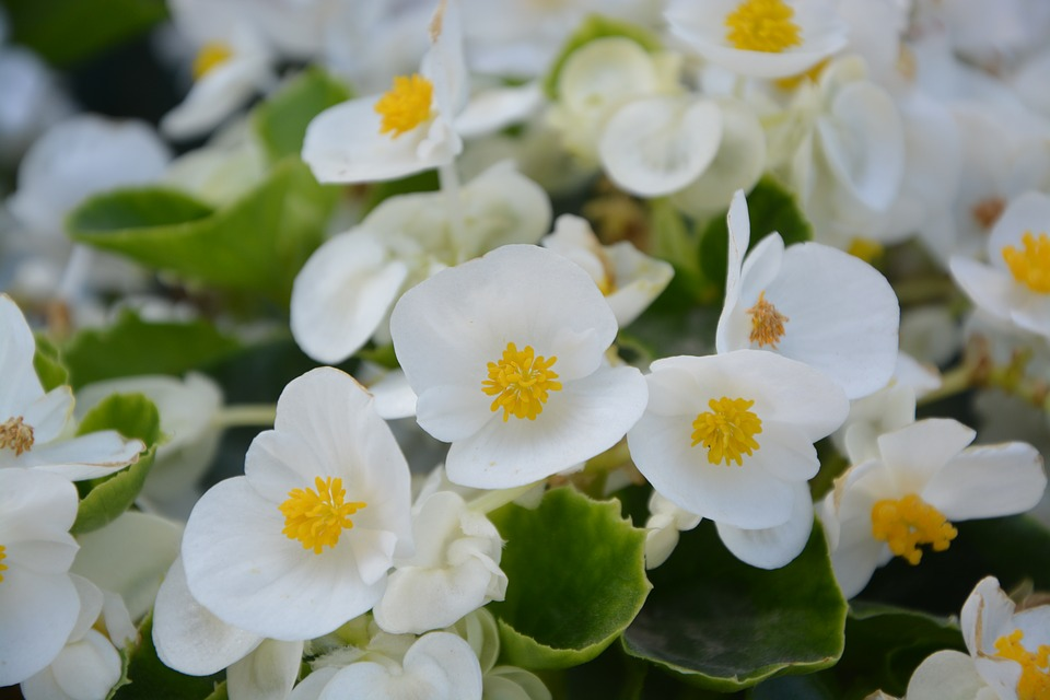 Flower, White, Nature, Green, Yellow, White Flowers